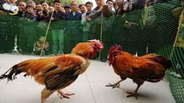 Situs Judi Sabung Ayam Bonus Besar